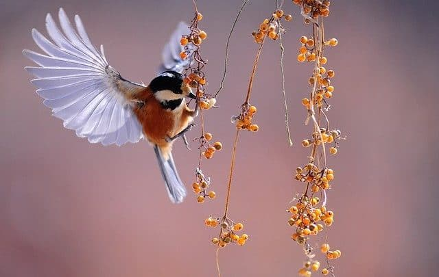 bird feeding on berries