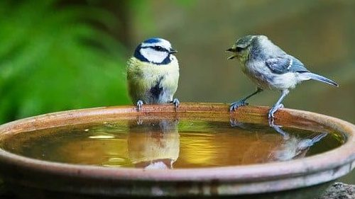 Two Birds perched on the side of a bird bath