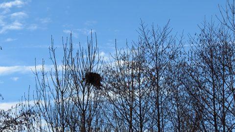 a birds nest in a tree