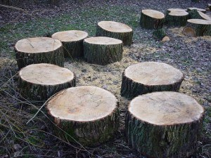 wooden disks cut from a tree