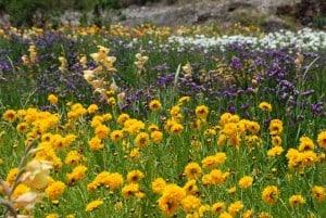 various wildflowers