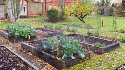 How To Start A Vegetable Plot or Patch