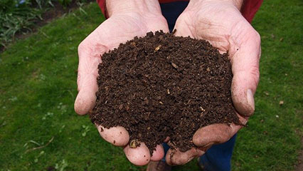 Person holding compost in there hands