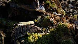 rotting logs