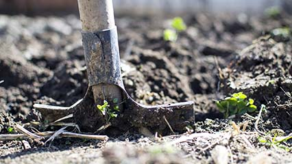 Understanding Garden Soil, All You Need To Know