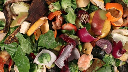 What You Can and Cant Compost