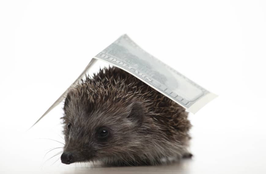 Best Hedgehog House For Your Garden