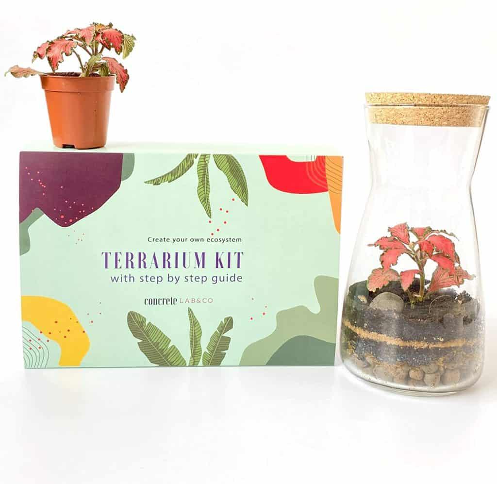 Handmade Clear Glass Terrarium Kit