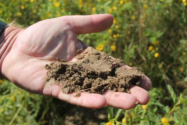 Sandy soil texture shown in a hand